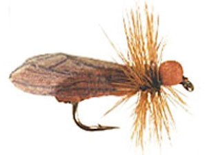 Brown Caddis
